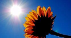 Bővebben: A D vitamin és a rák